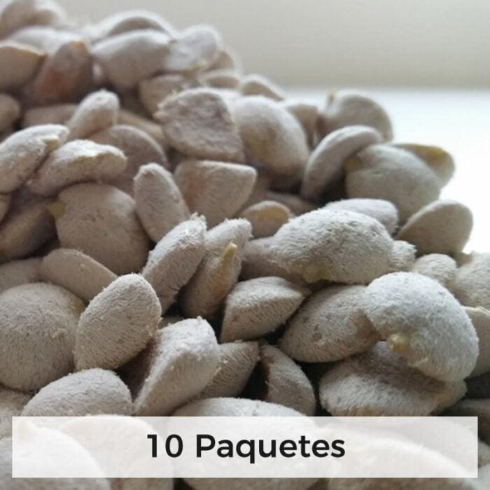 nuez de la india semillas 10 paquetes 1