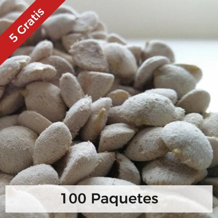nuez de la india semillas 100 paquetes 1 1
