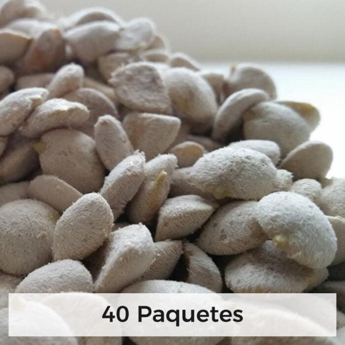nuez de la india semillas 40 paquetes 1