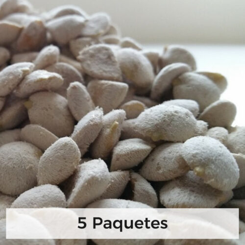 Indian Walnut seed packages wholesale